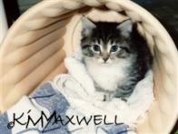 KimberlyMaxwell.com