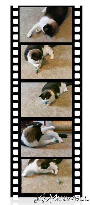 5-up-film-strip-tyler