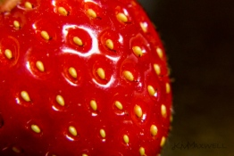 kimmaxwell_strawberry-seeds-forever_a-sm