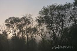 Foggy sunrise 5-9-15 (2)-sm