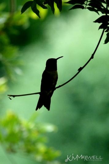 2011 birds (374)-sm