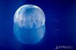 frozen soap bubble 01 02 2018 6-4-sm
