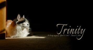Trinity In Memory