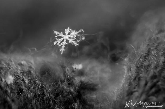 Winter Details.jpg