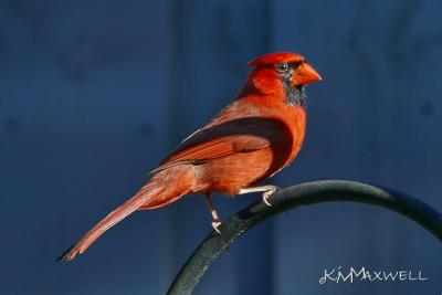 Cardinal 06 04 18-sm