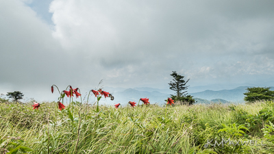 Roan Mountain Balds 06 19 18 11 23  11-sm.jpg