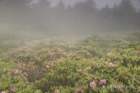 Roan Mountain Gardens 06 19 18 09 53 10-sm