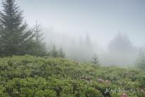 Roan Mountain Gardens 06 19 18 09 55 21-sm