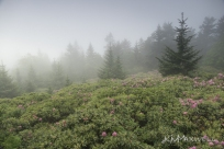 Roan Mountain Gardens 06 19 18 09 57 36-sm