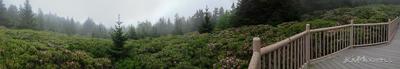 Roan Mountain Gardens 06 19 18 09 59 56-sm