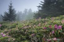 Roan Mountain Gardens 06 19 18 10 04 34-sm