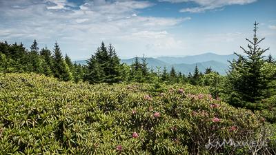 Roan Mountain Gardens 06 19 18 14 40 49-sm