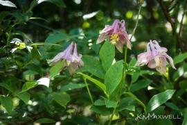 Roan Mountain Gardens 06 19 18 14 44 56-sm