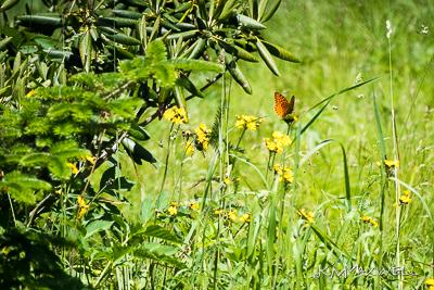 Roan Mountain Gardens 06 19 18 14 45 31-sm