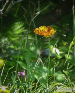 Roan Mountain Gardens 06 19 18 14 48 13-sm