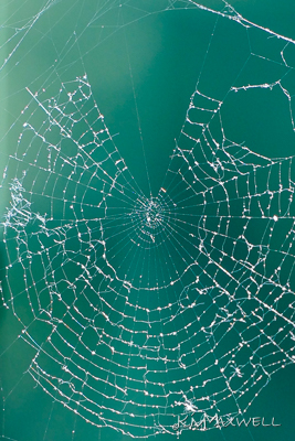 spider web 06 04 18-sm