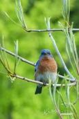 Bluebird 05 06 2013 09.35.40-sm