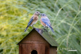 Bluebird 10 02 2015 11.37.51-2-sm