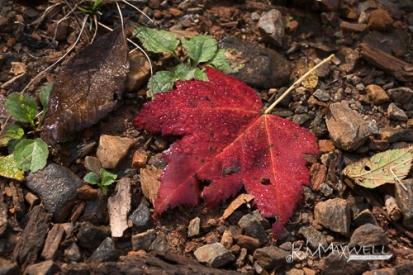Fall leaves along Logging Road 10 31 2018 11.49.32-sm