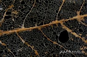 2of 52 delicate skeletal leaf remains