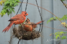 Father and Son Cardinals 09-23-2018 1-sm