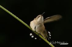 Hummingbird 09-29-2018 10-sm