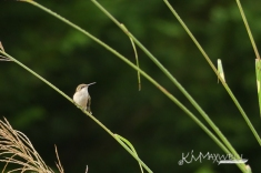 Hummingbird 09-29-2018 2-sm