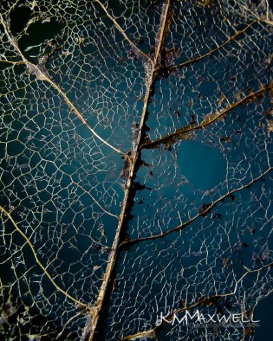 frangile leaf skeletal remains-sm