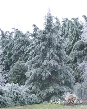 ice storm 01-13-2019 13-sm