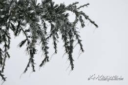 ice storm 01-13-2019 4-sm