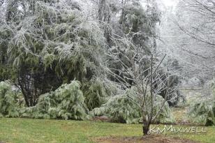 ice storm 01-13-2019 6-sm