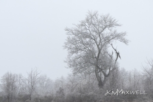 ice storm 01-13-2019 9-sm