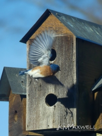 bird 1-sm