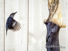 bird 11-sm