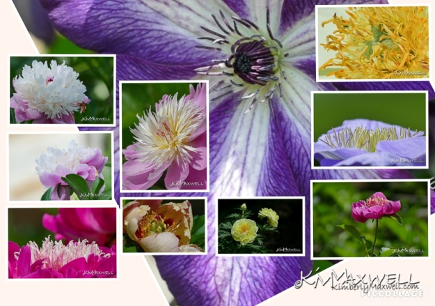 Wildcat Ridge Peony Farm Collage-sm.jpg