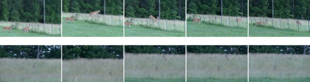 deer jumping collage
