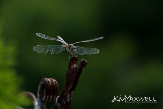 Dragonfly 07-20-2019 10.01.37-sm