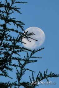 Evergreen Moon 07-19-2019 06.59.59-sm