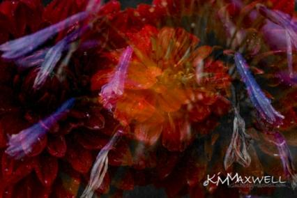 Flowers like fireworks-3-sm