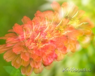 Flowers like fireworks-sm