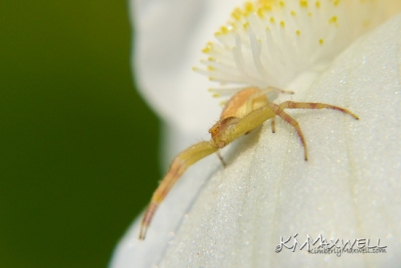 Iris and the Spider (1)-sm