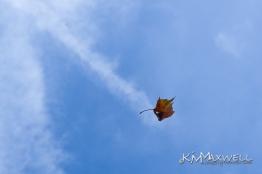 leaf P1110783-e 109 (2)-sm