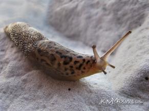 Slug 09-22-2010 18.24.52-sm