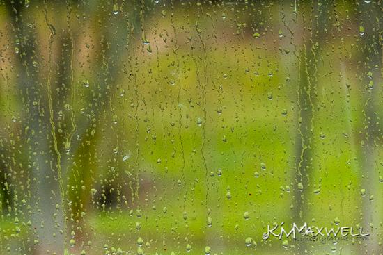 Still Raining 03-08-2019 11.31.08-sm