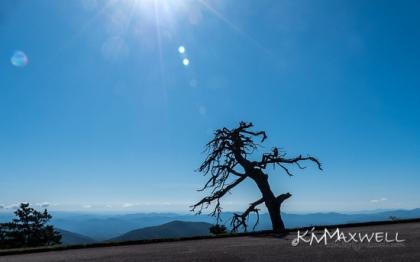 Dead tree BRP 10-11-2019 11.20.29-sm