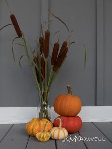 Pumpkins 10-10-2019 11.52.26-sm