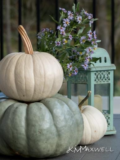 Pumpkins 10-10-2019 17.27.08-sm
