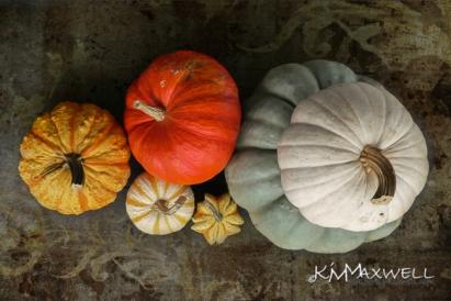 Pumpkins form above-sm