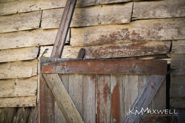 William Washington White Barn 10-24-2019  15.19.55-sm.jpg