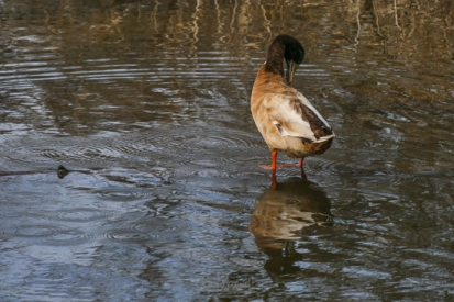 Beaver Lake Bird Sanctuary 01-09-2020 13.44.46-sm